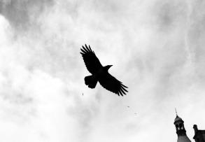 bird-379296_960_720